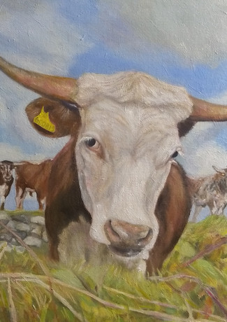 Cow Portrait 2