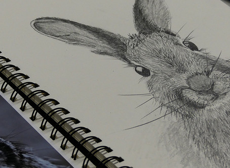 New Drawing Workshop & New Classes