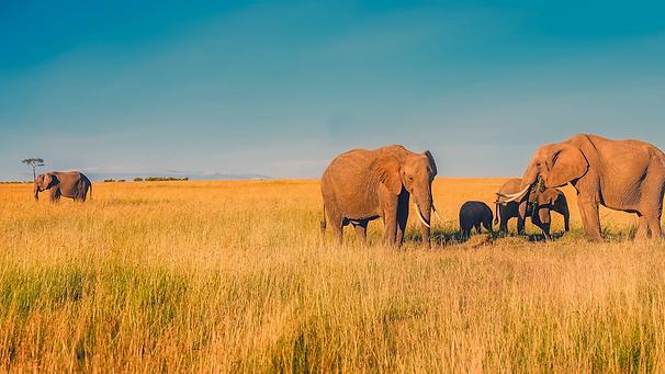 Africa, Elephants