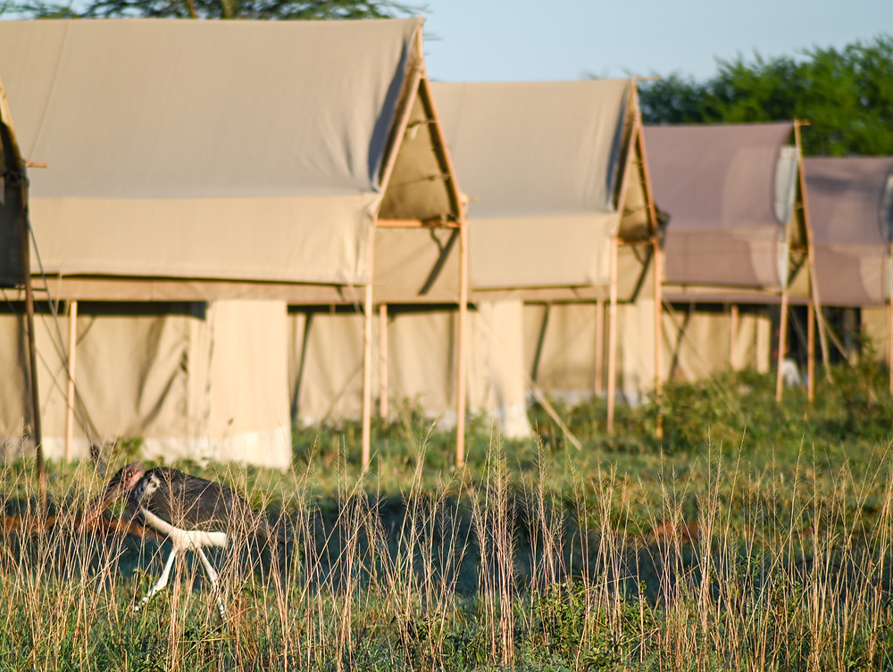 Our camp, Tortillis - beautiful rooms, delicious meals, and animals to boot. | Trac.City