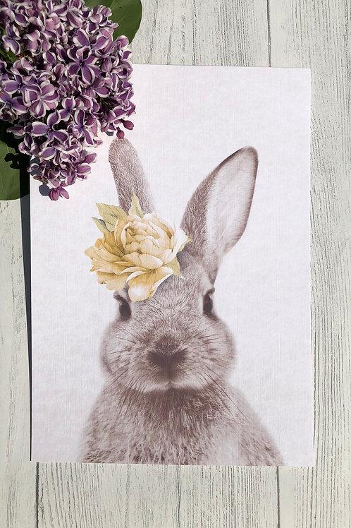 Rabbit A4 Print