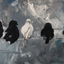 the white pigeon