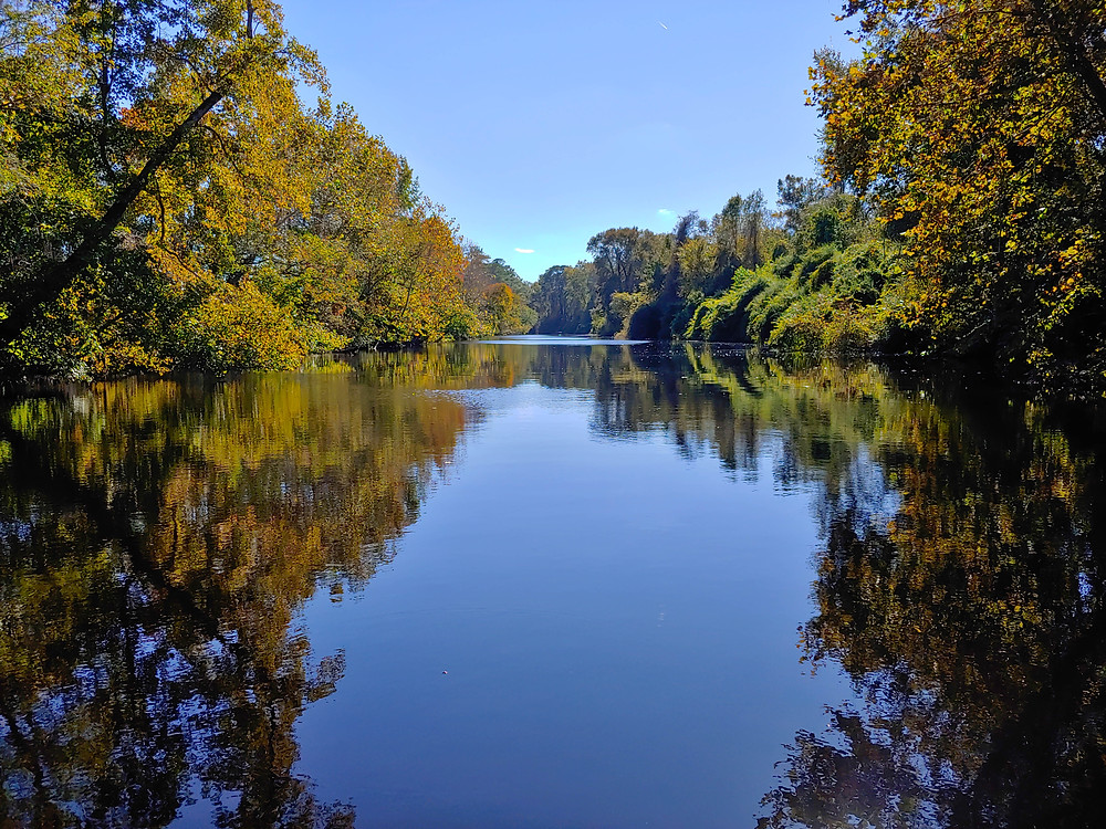channel, canal, swamp, dismal swamp, autumn
