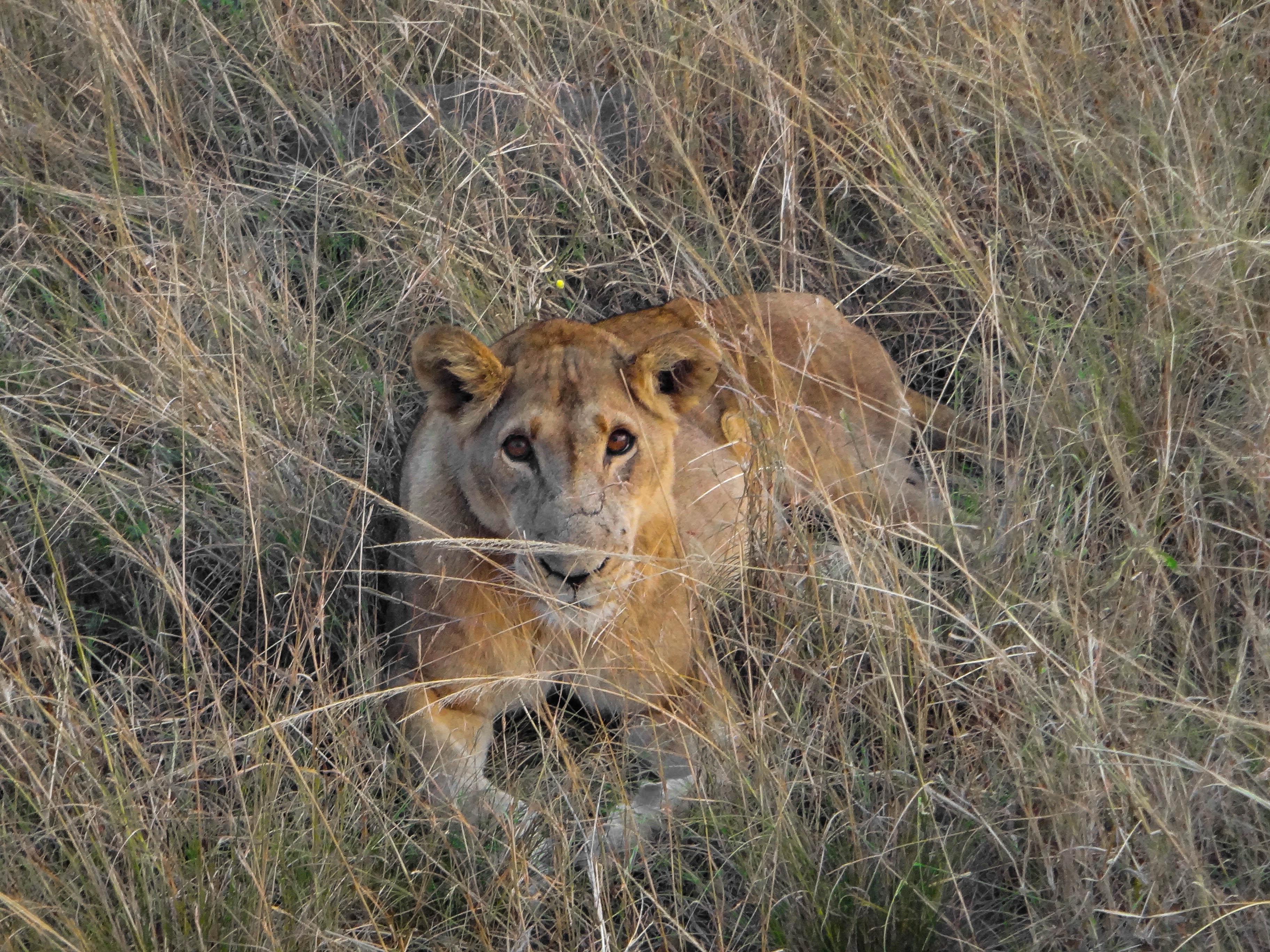Queen Elizabeth National Park,Uganda