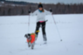 Lisa & Panda skijoring at the Renton Family Snow Track