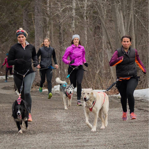 Trail Etiquette For Harness Dog Sports