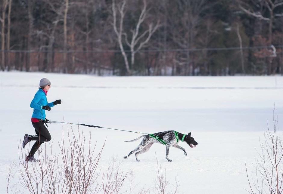 Winter Running on Six Legs