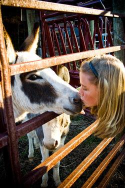 Donkey Kiss Portrait