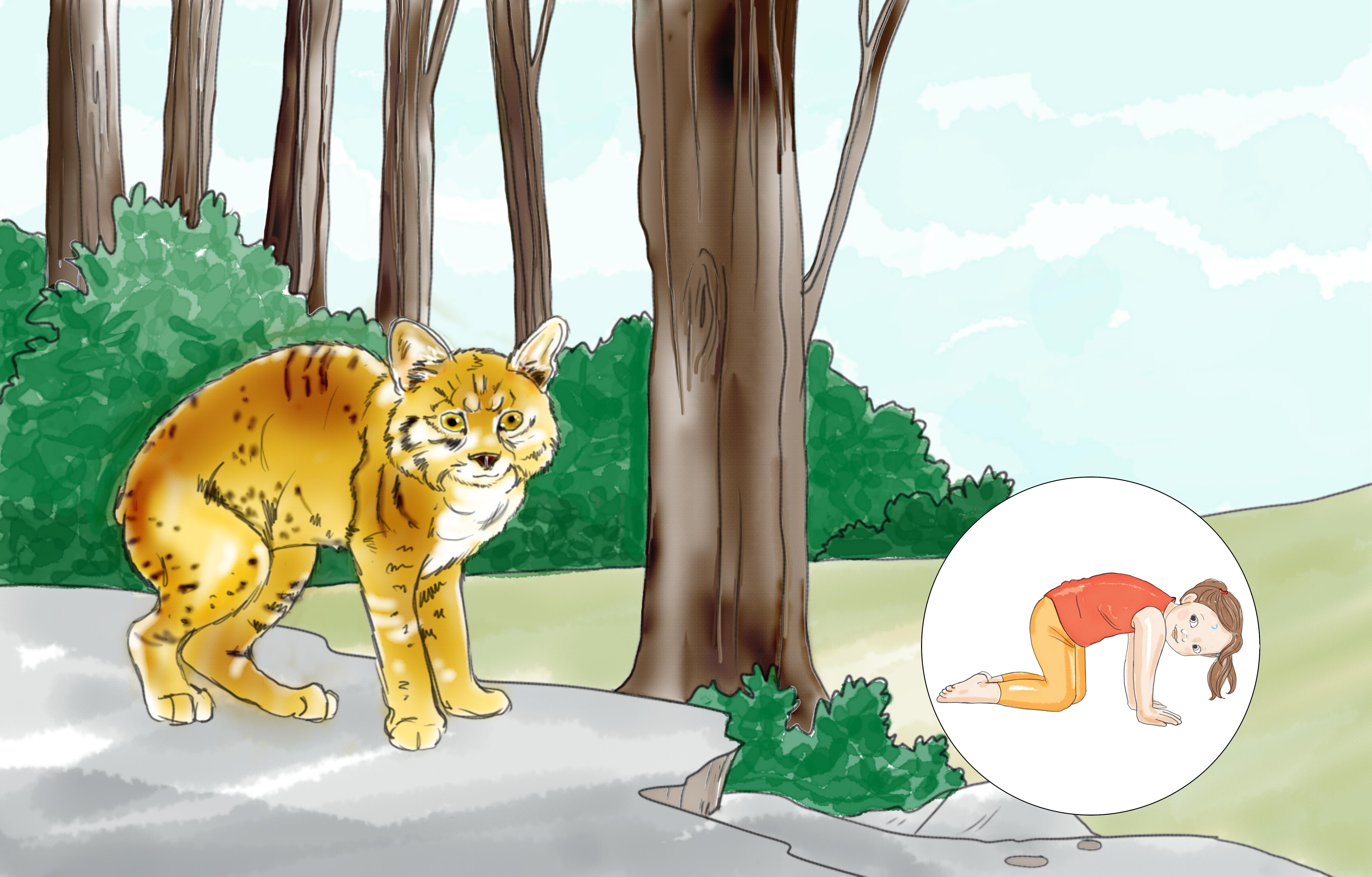CAT SPREAD