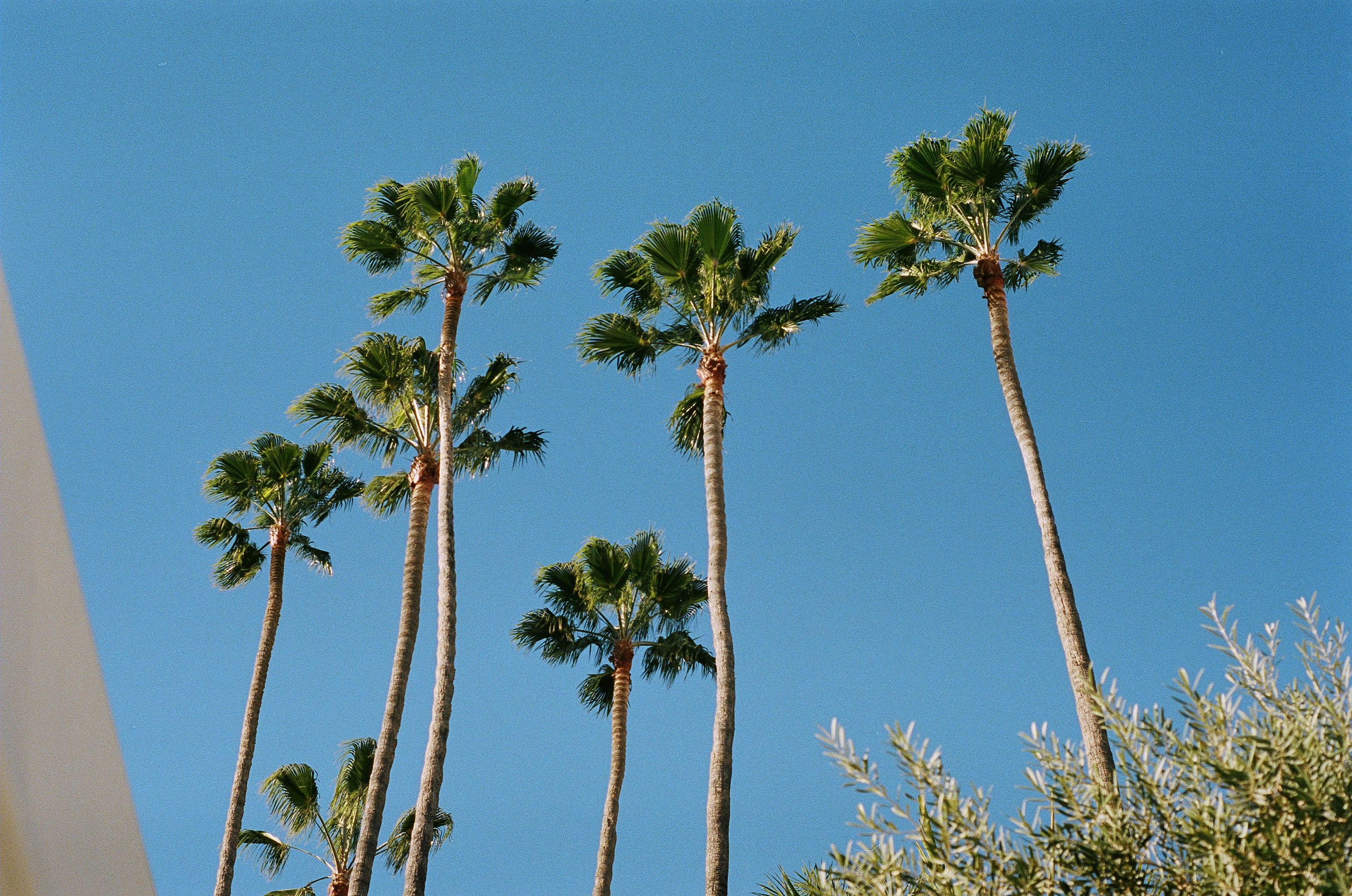 Those palm trees