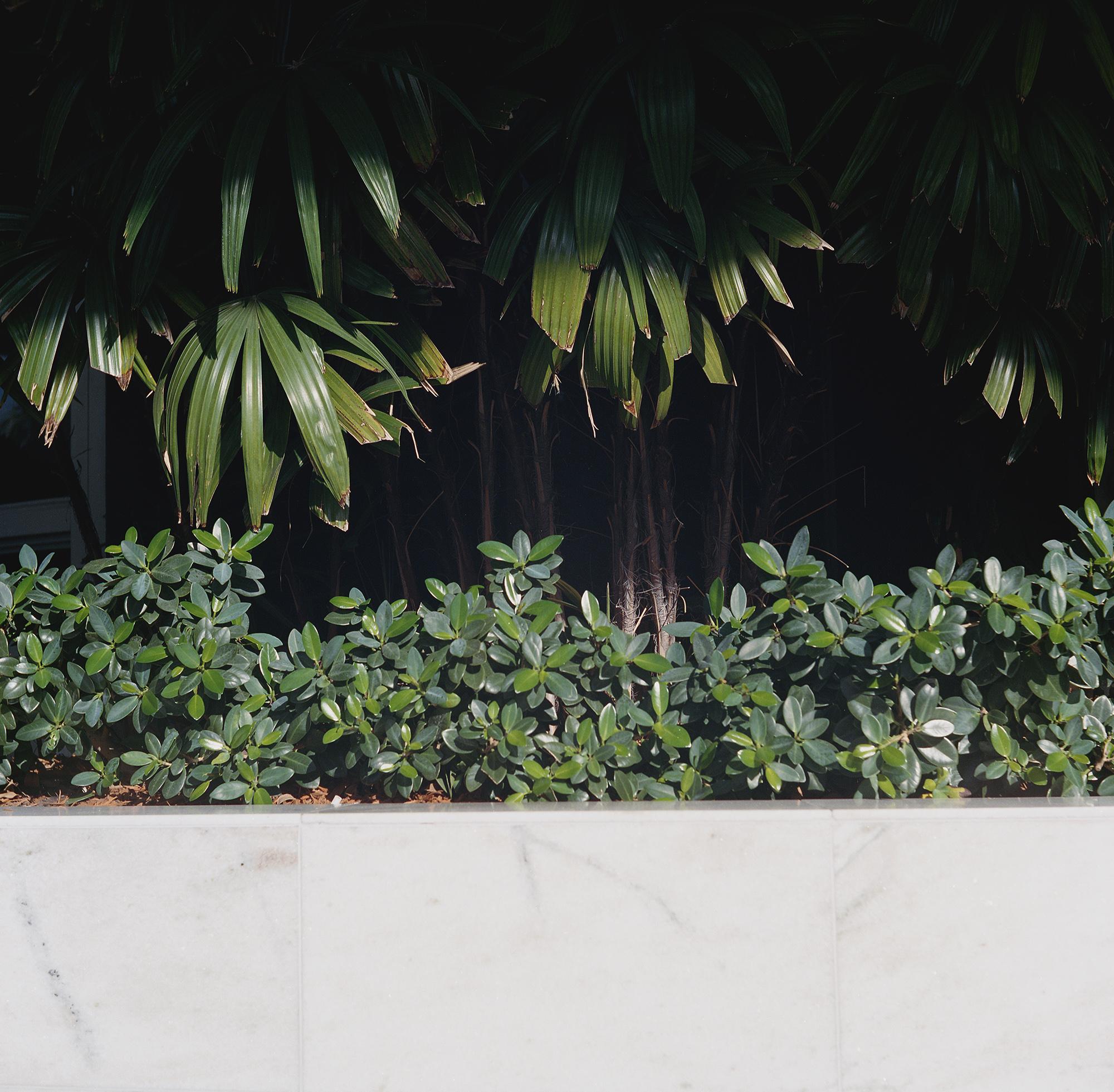 Plantes floridiennes