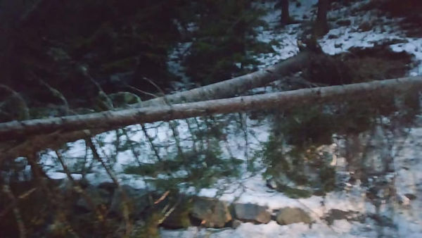 Baum auf L237 24.12.2018 .jpg