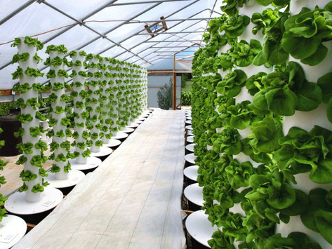 Food Hub una nuova rivoluzione tecno contadina.