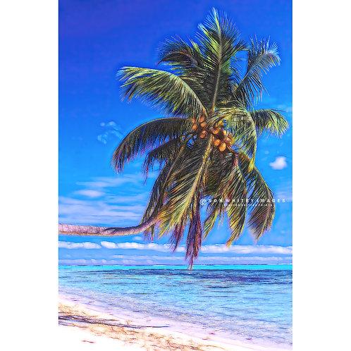 Maldives Palm Tree no 2