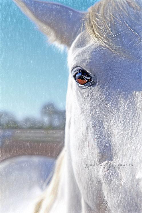 Camargue Horse no 2