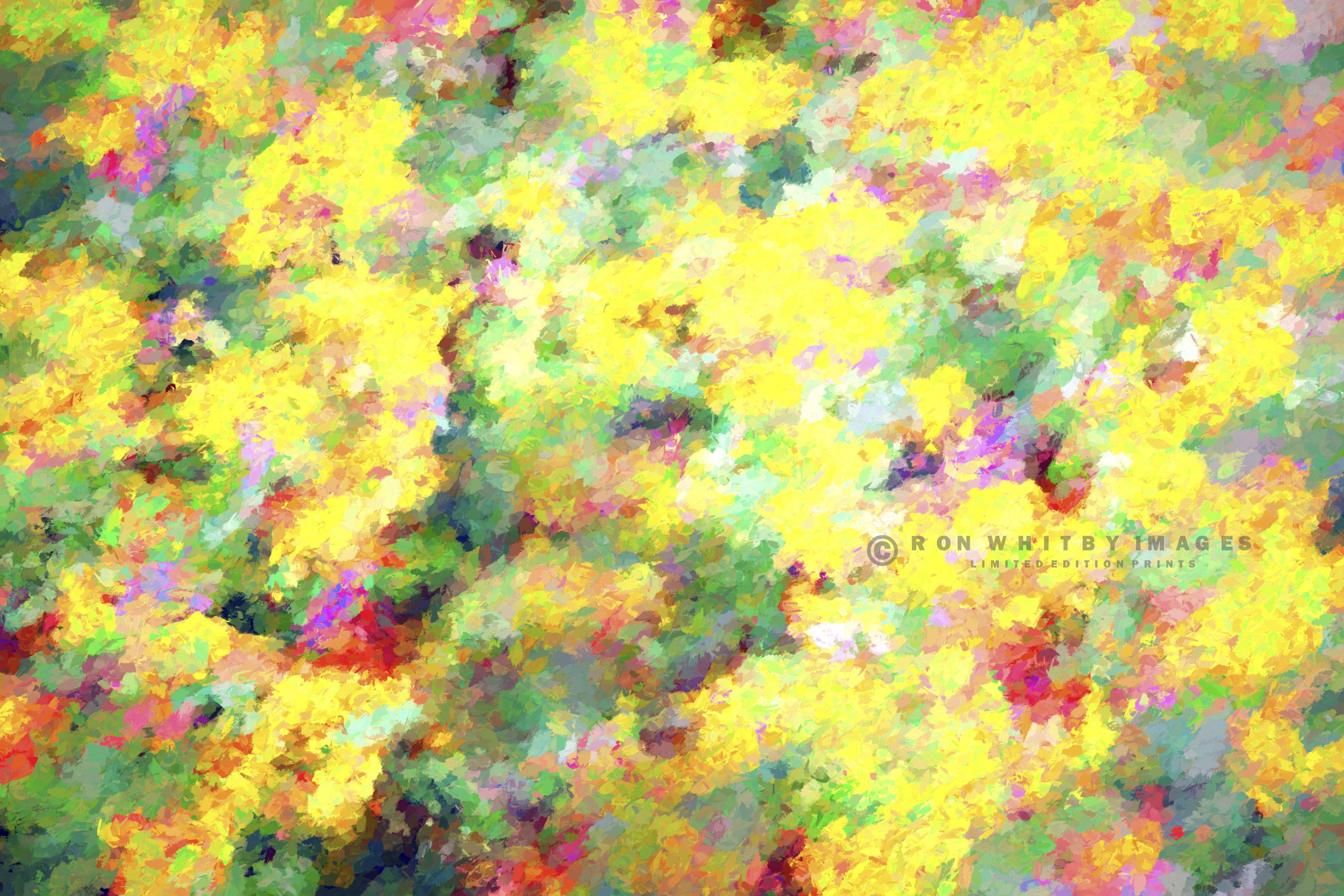 10014 Summer Flowers - Aigues Mortes