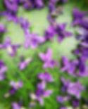 domaine-du-petit-mylord-confit-de-fleurs