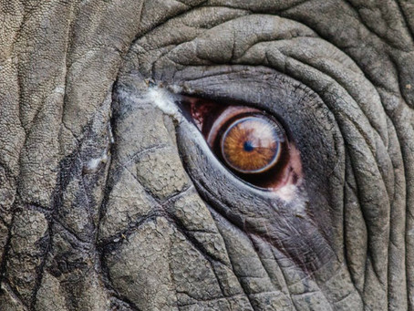 Is That Elephant in the Room Staring You Down?