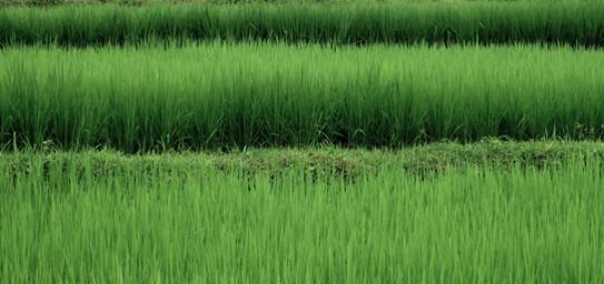 Green-001.JPG