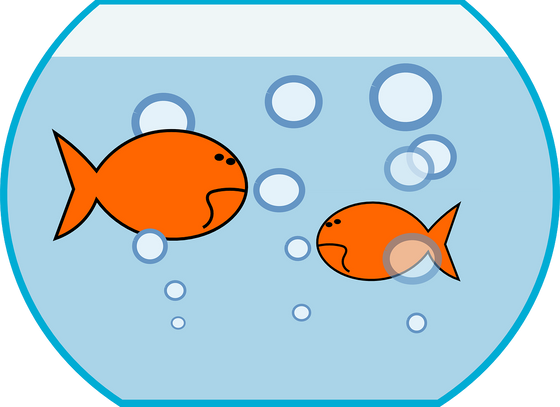Fish don't know they're in water - A Metaphor for Coaching.