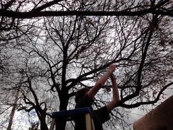 Judy Herzl ladder2w tree.jpg