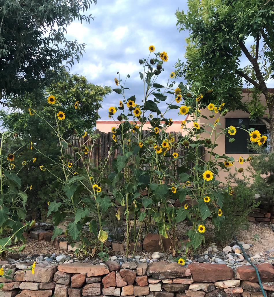 sunflowersrussell.jpg