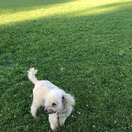 poodles and parks.jpeg