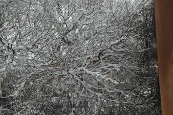 Judy Herzl sideways tree.jpg