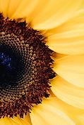 pexels-karolina-grabowska-4622893.jpg