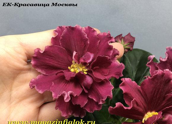 ЕК-Красавица Москвы