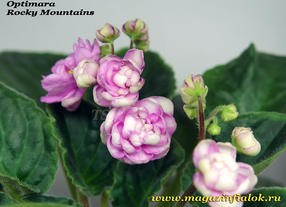 Optimara Rocky Mountains