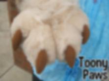 Toony Paws.jpg