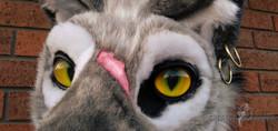 Zolo Close Up