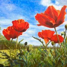 Poppies of Maine