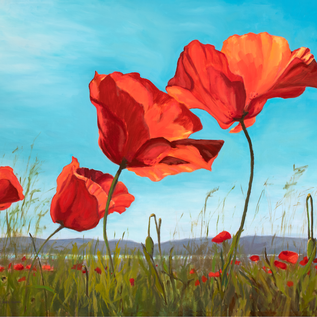 Poppies in the Breeze