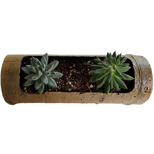 Home - Hollowed Aspen Log Planter with Succulents
