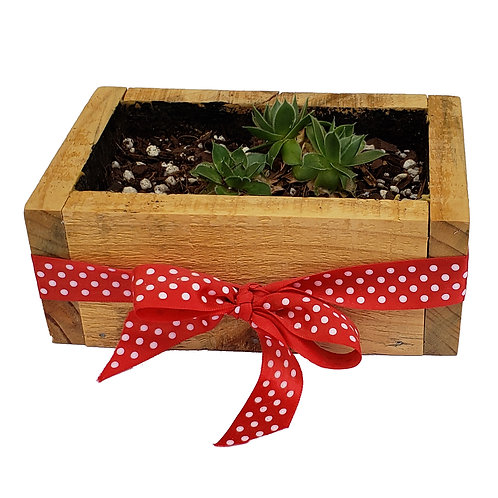 Home - Pallet Wood Planter with Red Bow and Succulents