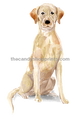 23 Labrador Retriver