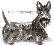 46 Scottish Terrier