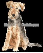 48 Welsh Terrier