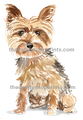 47Yorkshire Terrier
