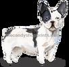 2 Black and white French Bulldog