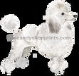 29 White Poodle