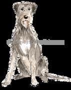 42 Irish Wolf Hound