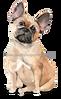 5 French Bulldog