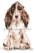 12 Cocker Spaniel (Brown)