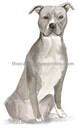 32 American Staffordshire Terrier