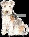 44 Lakeland Terrier Shadow