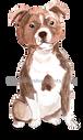 33 Staffordshire Bull Terrier