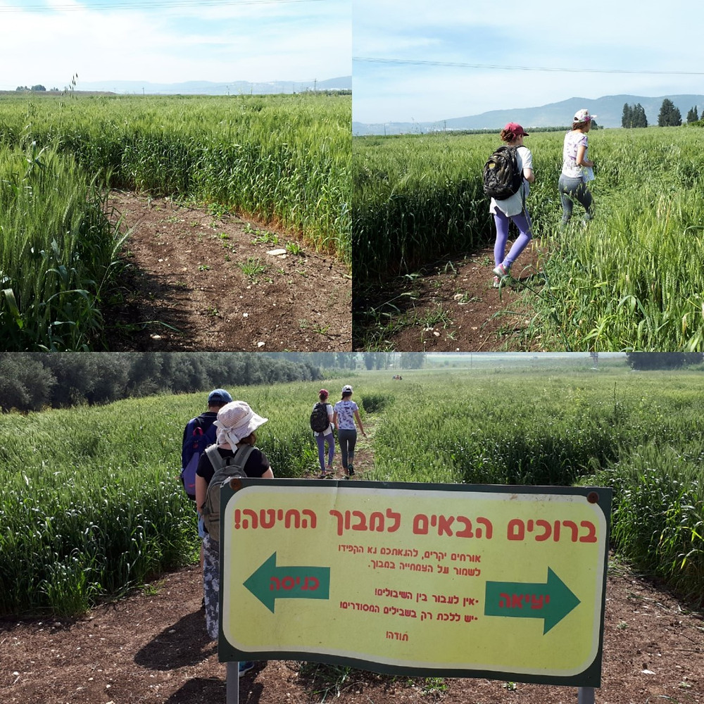 Mavoch Ba'Emek Maze in Sde Yaakov
